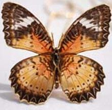 REAL BUTTERFLY JEWELLERY